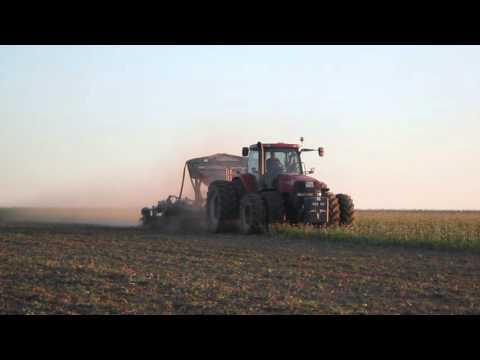 Weizen Direktsaat in Zwischenfruchtmischung