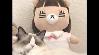 コレサワ「この恋はスクープされない」【Music Video Making】