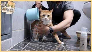 고양이 목욕 시켰습니다.