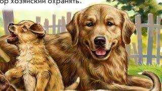 Стихи про домашних животных (кошку, собаку, лошадь)