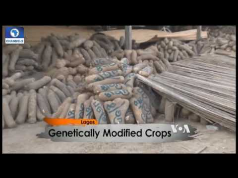 Africa 54: Focus On Genetically Modified Crops
