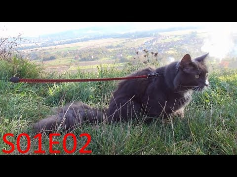 Hiking with Benek The Norwegian Forest Cat - Over rock gate [S01E02]