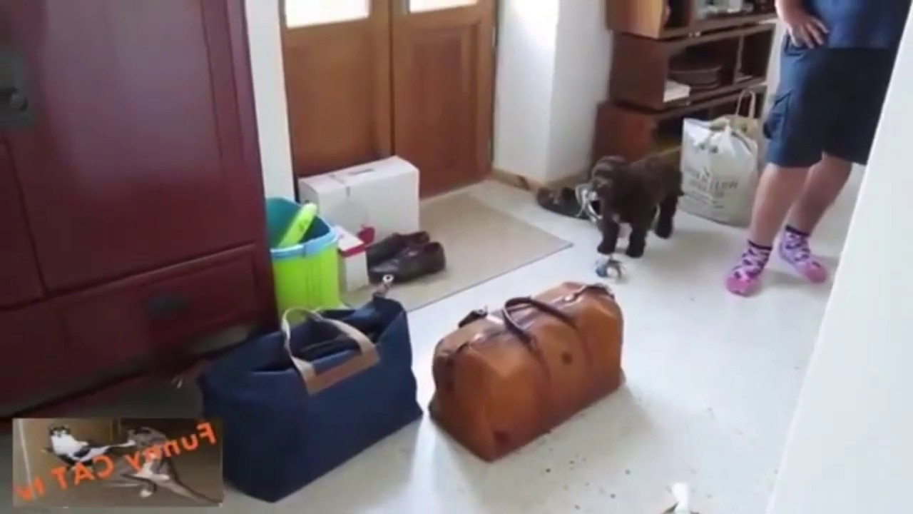 cat and dog first meeting with each other / funnt cat and dog video