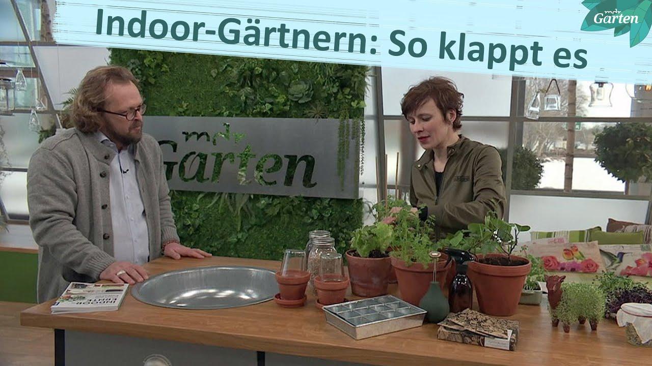Bloggerin Carolin Engwert: So klappen Gärtnern und Ernten ohne Garten | MDR Garten