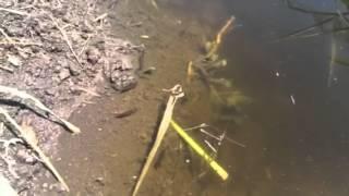 Dragonfly Habitat