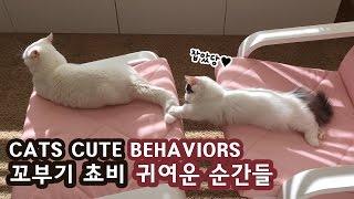 고양이 꼬부기 쵸비 귀여운 순간들: 케이블 물다 화들짝 CUTE CAT BEHAVIORS