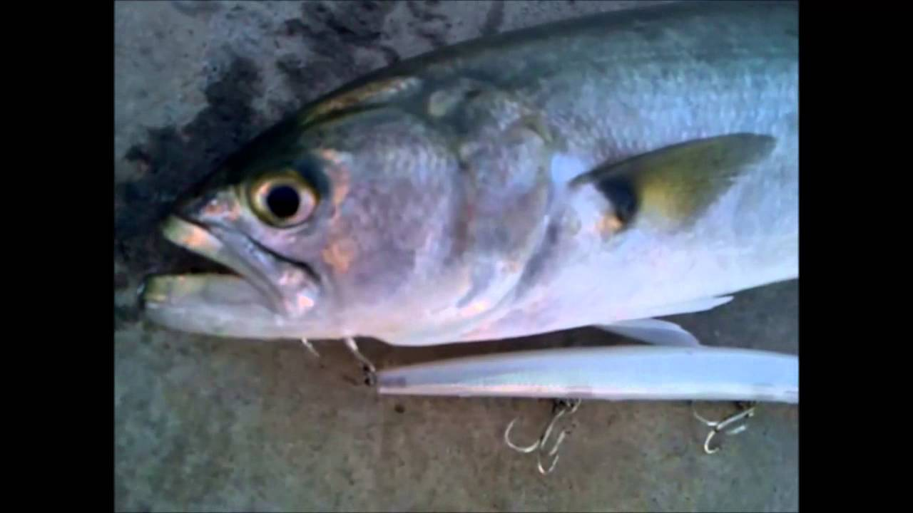 Rapala MaxRap 17 (Bluefish-Γοφάρι)