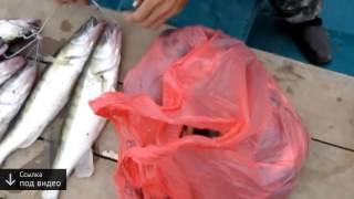 Рыбалка в Астрахани тролинг  1 декабря