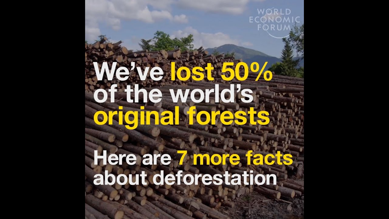 We've lost 50% of the world's original forests Here are 7 more ...