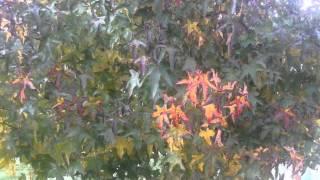 Quinta da Cerca - Outono  - Quinta da Cerca
