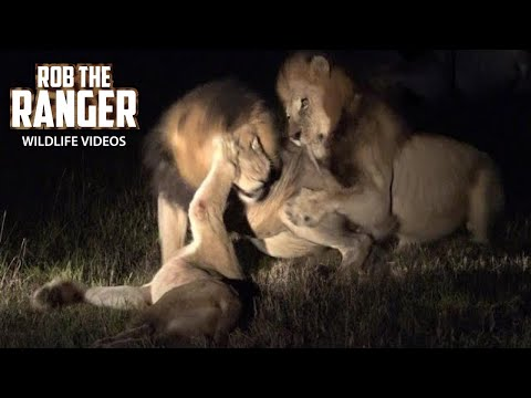 last-moments-of-a-lioness-|-lion-pride-drama