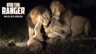 Last Moments Of A Lioness | Lion Pride Drama