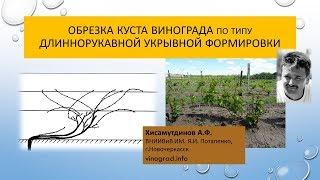 Формирование молодого куста по типу длиннорукавной укрывной формировки, Хисамутдинов АФ Новочеркасск