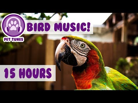 15 Hours! How To Calm A Parrot! New Relaxing Music Has Helped Over 4 Million Pets - Pet Therapy