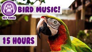 कैसे एक तोता शांत करने के लिए! नई आराम संगीत ने 4 मिलियन से अधिक पालतू जानवरों की मदद की है screenshot 5