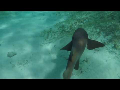Chasing Sharks in The Bahamas with a Seabob