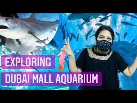 Dubai Aquarium & Under water Zoo