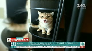 Кумедні відео домашніх улюбленців від глядачів Сніданку з 1+1