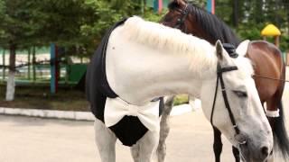 Свадьба лошадей в Благовещенске