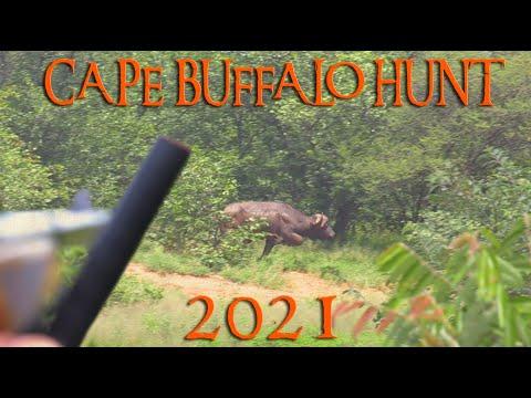 Cape Buffalo Hunt early season 2021 – 44 inch Cape Buffalo