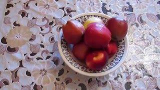 Как вырастить яблоню из семечка в домашних условиях + видео
