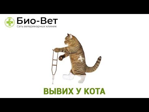 Вывих у Кота Как Определить и Что Делать // Сеть Ветклиник Био-Вет