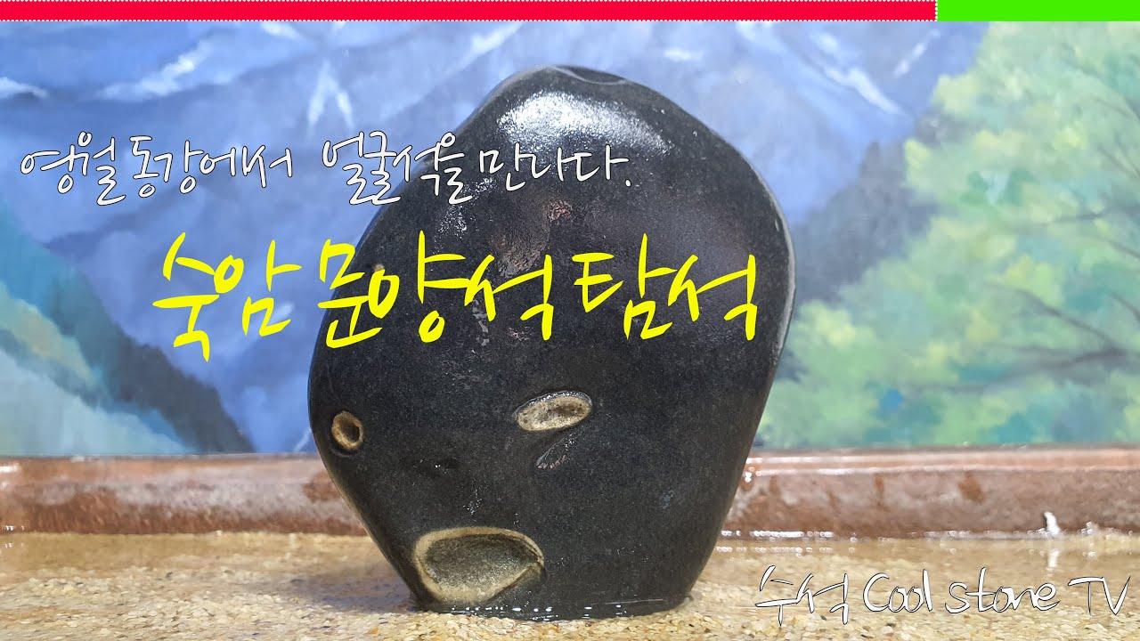 숙암 얼굴석을 만나다. 영월 동강 탐석