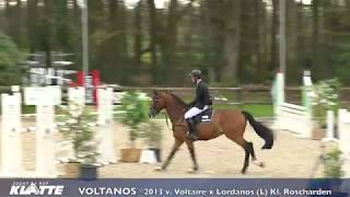 Voltanos *2013 v. Voltaire x Lordanos (L) Kl. Roscharden
