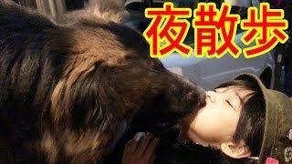 grandchild and #GermanShepherd#秋田犬 #シェパード犬 ジャーマンシェ...