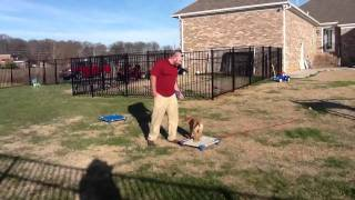 "Pak Masters Dog Training ""how To Train A Puppy"""