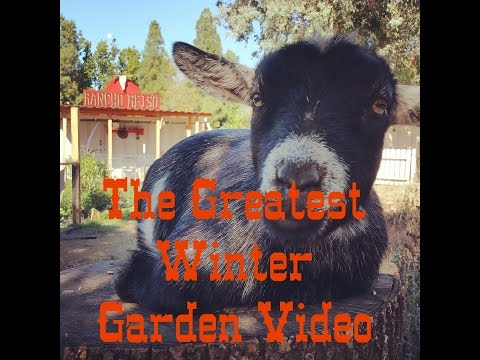 Greatest Winter Vegetable Garden Video at Rancho Reiso 2017