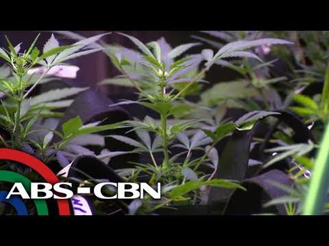 Police raid 'indoor marijuana laboratory' in San Juan | UKG