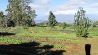 O'o Farm, Maui 2014