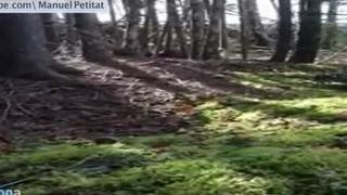 В канадском лесу земля начала дышать