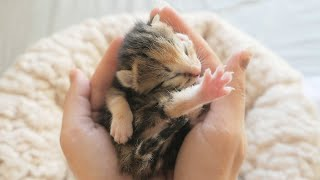 Newborn Kittens Who Have Lost Their Mother - Four Little Warriors