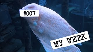 SEX AT THE ZOO?! [My Week #007 Vlog] w/ InTheLittleWood