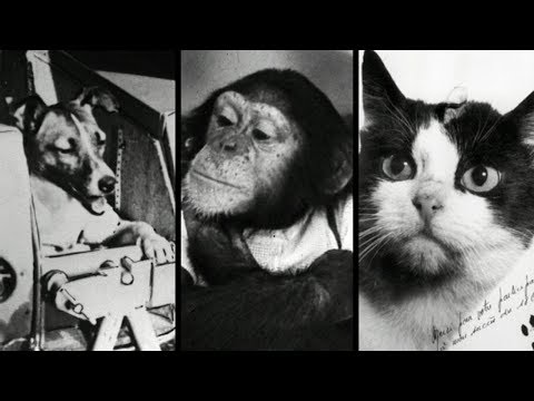 10 Animals That Went To Space Youtube