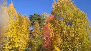 мои фото и клип на песню ддт что такое осень.