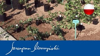 Rośliny okrywowe - planowanie i sadzenie