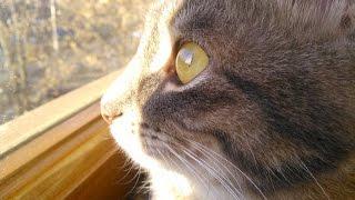 Интересный факт о хвосте кошки.Значение хвоста в  падении кошек.Астронавт как кот...?