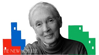 Jane Goodall on the Life Lessons She Learned from Chimps | The New Yorker Festival