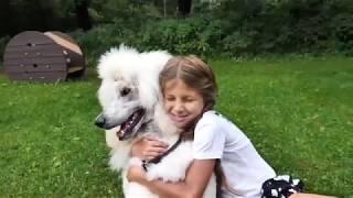Клип про собаку «Преданней собаки, нету существа!»