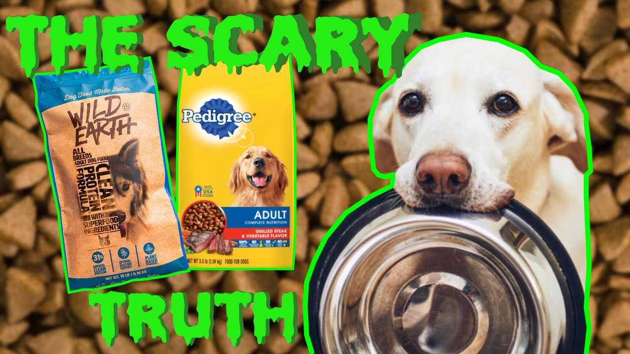 The Scary Truth About Dog Food