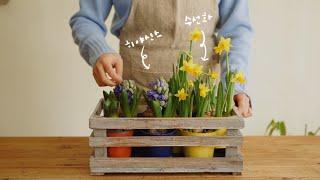 [Spring Class] 초봄, 구근식물 수경재배 가…