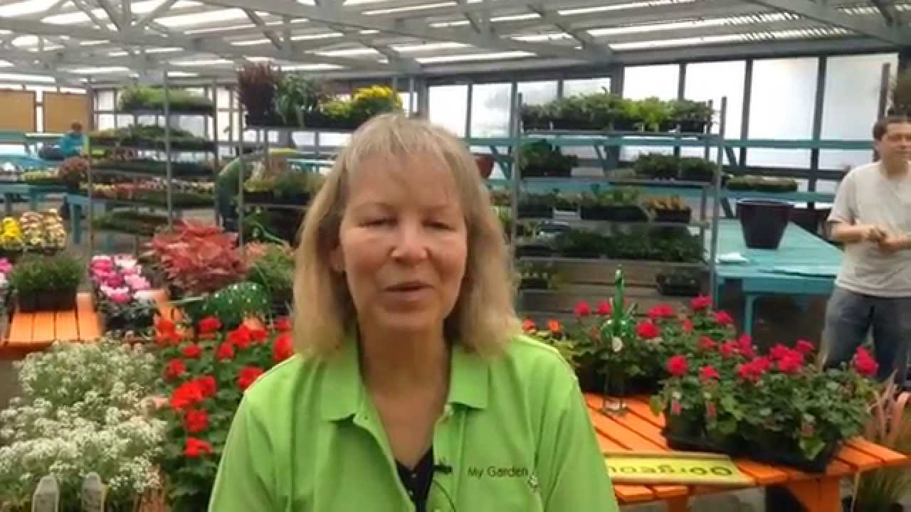 My Garden Nursery Opening In Bellingham