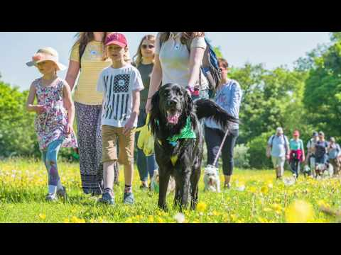 Bath Cats and Dogs Home - Wag Walk