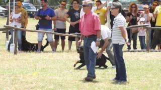 Ztp Rottweiler Club Italiano  Capena ( Roma)  06 2014- Cocochanel Nikferre - Video Niferre