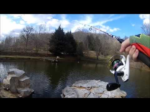 Fishing A Stocked Private Catfish Pond