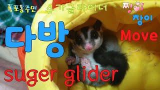 [kobo jeong] 슈가글라이더 다방하다~~~  S…