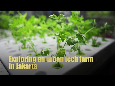 Live: Exploring an urban tech farm in Jakarta  印尼雅加达城市农场科技